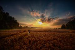 lights at the horizon (radonracer) Tags: landscape cornfield niederrhein boeckelt