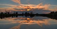 Sunset oostvaardersplassen