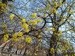 The Spring is Yellow!