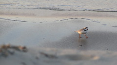 IMG_5485 (Martina Mastromonaco) Tags: beach vineyard martha s subset