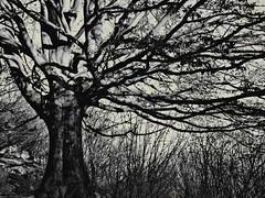 The Tree of Life (Ska * mon) Tags: tree albero rami bestcapturesaoi