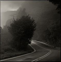 mountain road in fog ('eliat) Tags: 6x6 mediumformat fuji yangmingshan acros mountainroad rodenstock 15056