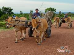 Farmers - Khmer Cruiser.jpg
