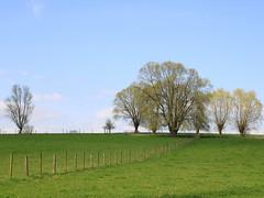 paesaggio fiammingo - Flemish landscape (Kristel Van Loock) Tags: trees alberi landscape bomen belgium belgique belgië arbres paysage belgica paesaggi paesaggio landschap flanders belgien belgio vlaanderen flandre haaltert erpemere fiandre