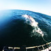 """The great white shark • <a style=""""font-size:0.8em;"""" href=""""http://www.flickr.com/photos/49707099@N00/7177402308/"""" target=""""_blank"""">View on Flickr</a>"""