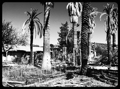 Abandoned (spider.canyon) Tags: wickenburg arizona roadside us60 hotel palmtree tree oldwest abandoned bw motel scary