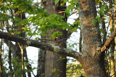 085 (Daniele_Sharpe) Tags: nature birds spring wildlife newhampshirehiking nhwildlife