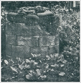 A Lenton Priory ancient Pillar Base  pictured amongst Garden Cabbages : circa 1929 .