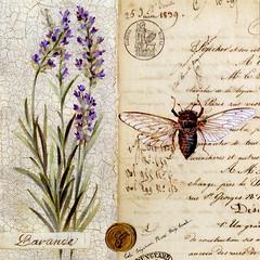 Lavande (katya.) Tags: france postcard lavender provence