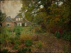 P1150525 KF - Texture Wood (Gerrit Luggenhorst) Tags: imageourtime