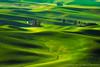 Emerald Waves (Gary J Weathers) Tags: green washington butte hills palouse steptoe nikond800 ☆thepowerofnow☆ garyjweathers