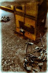 Casa de João (Junior AmoJr) Tags: street color art sol arquitetura brasil photoshop canon sãopaulo chuva pb paisagem junior cor snapfish gettyimages lightroom t3i atibaia photostreet itsnoon gettyimagesandtheflickrcollection gettyimagesbrazil amojr junioramojr crowdart oliveirajunior riafestival