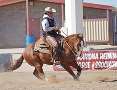 Reining Horse 59 (blackhawk32) Tags: horse equestrian equine scottsdalewestworld cactusreiningclassic2012