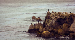 Bird Island (andrewpabon) Tags: mountain beach birds monterey birdisland