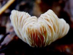 """20101710(1) (""""LINQUENDA"""") Tags: man gut und die pilze auf wenn boden isst gewchse richen schmecken bumen richtigen"""