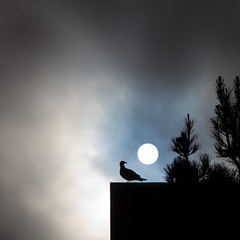 seagull sees sun (MyArtistSoul) Tags: ca blue sky sun silhouette clouds square ominous seagull minimal vignette ventura vhs nearsunset 5059 24105f4is