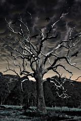 Haunted Tree (Serena178) Tags: storm tree bird clouds valley hunter crows ravens slidersunday