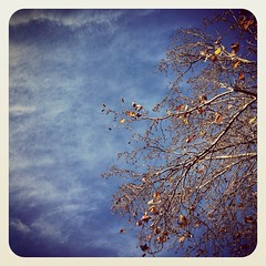 (Ruben Daniel Mascaro Photography) Tags: blue sky tree clouds square australia melbourne victoria squareformat cbd iphone casseldenplace casselden iphoneography