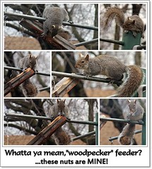 Hey, I worked hard for these (MissyPenny) Tags: squirrel pennsylvania wildlife easterngreysquirrel southeasternpa