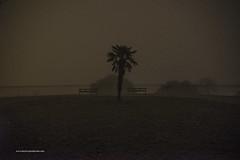 Palm treein' (DirtyBet Entertainment) Tags: trees light milan public strange fog lights foggy ufo lausanne palmtree midnight parc hilltop ovni durraive dirtybet