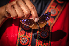 Taiwan-121113-222 (Kelly Cheng) Tags: travel red color colour tourism nature animals horizontal fauna butterfly daylight colorful asia day taiwan vivid colourful traveldestinations  northeastasia