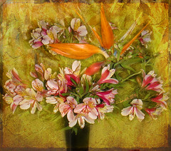 A day without flowers is like a heart without memories (Carolyn Ericson) (boeckli) Tags: flowers floral blossom blossoms blumen textures bloom bouquet colourful tas alstroemeria bunt strauss blten floraldisplay strelitzia texturen enteredinsyb