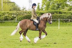 Hover Horse#2 (Carl@CDHPIX) Tags: horse equestrian equine hoverhorse allhoovesoffground horsehover