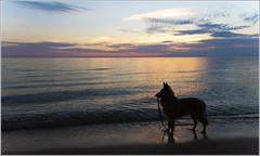 Star Silhouette  [Explore] (GLASman1) Tags: bear sleeping sunset puppy star michigan dunes lakemichigan lakeshore natl belgiantervuren empirebeach leelanauco 2016618