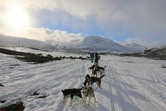 On the way to Kvikkjokk (85jose) Tags: dog sweden kvikkjokk sledding