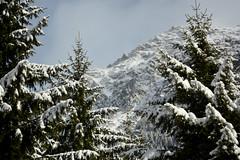10/2/2016... (tiagoelidio) Tags: trees winter snow alps alpes switzerland neve suca inverno rvores 366 project366 366project