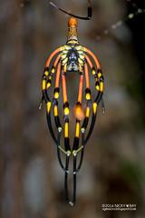 Golden orb weaver (Nephila sp.) - DSC_3883b (nickybay) Tags: macro golden spider singapore orb weaver moulting molting nephila nephilidae lorongladahitam