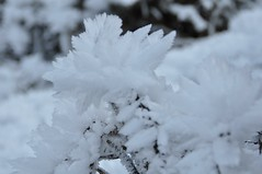 Ice flower (Lorybusin) Tags: snow ice nikon nieve neve ghiaccio