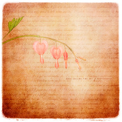 Family of Hearts (Greg Collins Fine Art) Tags: pink flowers red plants brown white plant flower green texture yellow writing hearts beige poetry poem heart outdoor text tan bleeding poems botany bleedinghearts photoborder