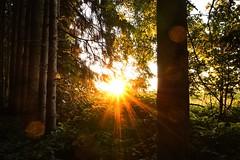 Sunset in the Forest (ptrckmayer) Tags: sun sunset sonne rot orange grn wald forest baum bume tree trees nature natur light landscape landschaft sony alpha
