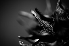 Detalle. (darknessnake) Tags: detalle bn monocromtico monocromatico