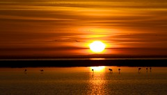 alba con fenicotteri, sunrising with flamingos (margit-luitpold2005) Tags: alba margit fenicotteri virgiliocompany