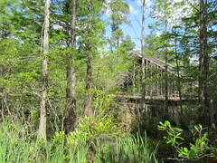 Pinecote Pavilion at the Crosby Arboretum (bluerim) Tags: mississippi pearlriver mississippistateuniversity euinefayjones picayune pinecotepavilion crosbyarboretum