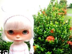 Tem uma Matilda no jardim...