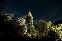 Into The Night (Christophe_A) Tags: longexposure tree night nikon skies tripod tokina greece astrophotography christophe f28 iso1600 arta d90 epirus 1116 tzoumerka christopheanagnostopoulos tetrakomo χριστοφοροσαναγνωστοπουλοσ χριστόφοροσαναγνωστόπουλοσ