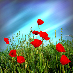 where the giant poppies grow.. (jesuscm) Tags: flowers sky naturaleza flores primavera nature 3d spring nikon cielo poppies amapolas jesuscm bestcapturesaoi magicunicornmasterpiece elitegalleryaoi flickrstruereflection1 flickrstruereflection2 flickrstruereflection3