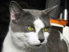 Zoey is still missing-explored (Debi's kids (Here very little)) Tags: pet nature animal cat canon feline zoey kissablekats bestofcats flickraward catmoments