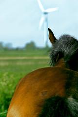Pferd (Lennart Lassen) Tags: sony alpha tamron 380 18mm 200mm 18200mm tamron18200mm sonyalpha alpha350 sonyalpha380