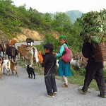 "Goat Crossing <a style=""margin-left:10px; font-size:0.8em;"" href=""http://www.flickr.com/photos/14315427@N00/7267944040/"" target=""_blank"">@flickr</a>"