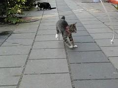 High Speed Alpha (Siesja) Tags: cat kitten casio playtime alpha highspeed slowmotion exilm exf1 300frames