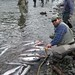 Kenai River Red Salmon Fishing