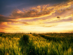 Summer wheatlands pt.4 (Zsolt Zsigmond) Tags: light sunset summer sky nature field clouds gold scenery colorful hungary wheat scape hdr