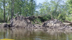 109_2020 - Copy (Dave Garvin) Tags: trip river canoe damage tornado huron