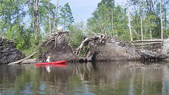 Huron River Tornado Damage Phil Roots (Dave Garvin) Tags: trip river canoe damage tornado huron