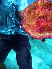 Snorkelling in Pele Island (geoftheref) Tags: ocean new travel fish water island marine underwater pacific south dive diving snorkeling snorkelling pele hebrides vanuatu melanesia geoftheref melanesian