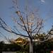 Hacienda Xcanat�n - M�rida Yucat�n M�xico 120228 233412 6964